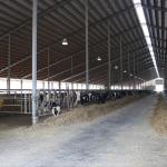 gentic-futures-calving